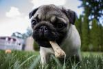 puppy-1502565_1920
